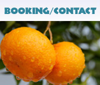 Booking / Contact us Button